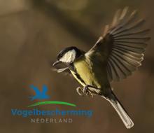 Online strategie Tuinvogeltelling